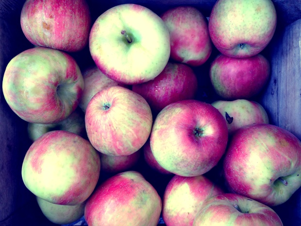 Kuhn Orchard Apples, Petworth Market