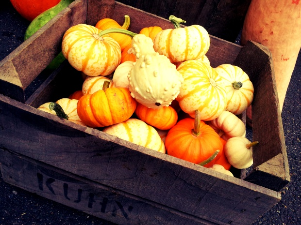 Kuhn Orchard squash, Petworth Market